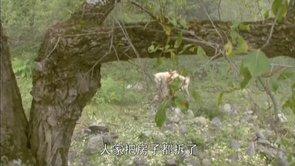 Thang Cheng V - Part 16