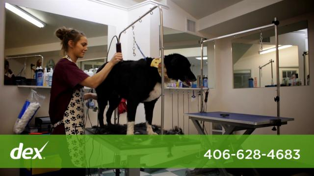Animal Lodge Pet Resort - Dex