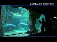 [VisioPortulan terre-mer] L'Aquarium de Gênes (1ère partie)