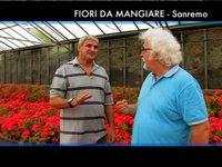 [VisioPortulan terre-mer]  Sanremo: Fleurs à manger