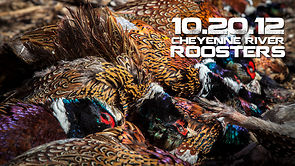 10.20.12 Cheyenne River Roosters