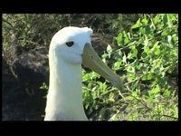 [Velisti per Caso] L'isola degli Albatros