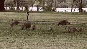 """THE GRIND WATERFOWL TV """"The Canada Goose"""""""