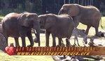 Планета животных - #2